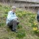 Daffodils in Belmont